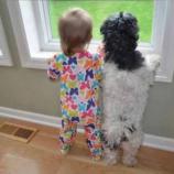 30 Fotos Que Desmuestran Por Qué Tus Hijos Deben Tener Una Mascota