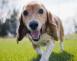 10 cosas que tu perro viejo piensa cuando te ve