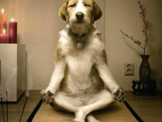 Formas en las que tu perro te ayuda a combatir el estrés