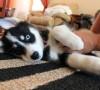 ¿Por qué los perros patalean cuando los rascas?